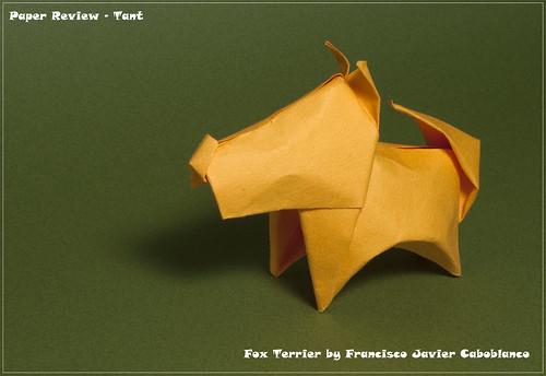 Tant - Fox Terrier