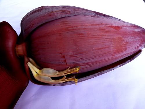 פרח בננה. השקיקים השקופים יהפכו לבננות בהמשך