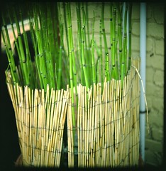 straw, bamboo, grass, wood, plant, green, plant stem,