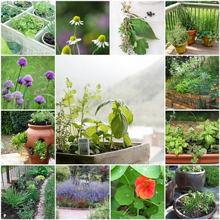 Grow your own ......   herbs