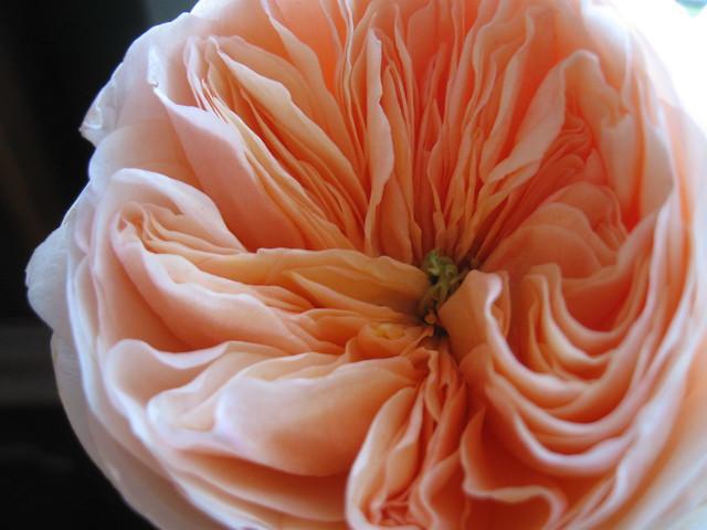 rose wallpaper hd full screen