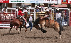 animal sports, rodeo, western riding, chilean rodeo, event, equestrian sport, sports, western pleasure, charreada, reining,