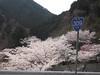 Photo:水越峠 - Mizukoshi Pass // 2010.04.10 - 03 By Tamago Moffle