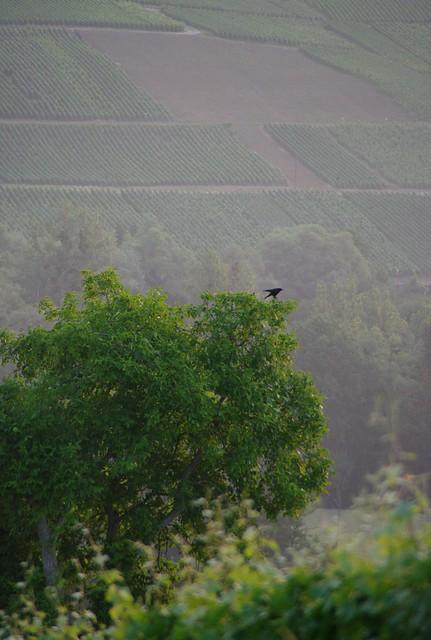 Header of le corbeau
