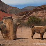 Llamas and Red Rocks in Northwestern Argentina