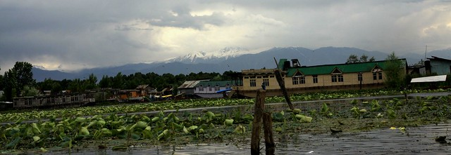 dal lake shikara ride