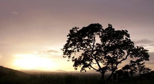popiart popi1909 border togo ghana volta voltaregion africa ho kame tree sunset silueta silhoutte atardecer landscape nature flora paisaje arbol campo field plateaux