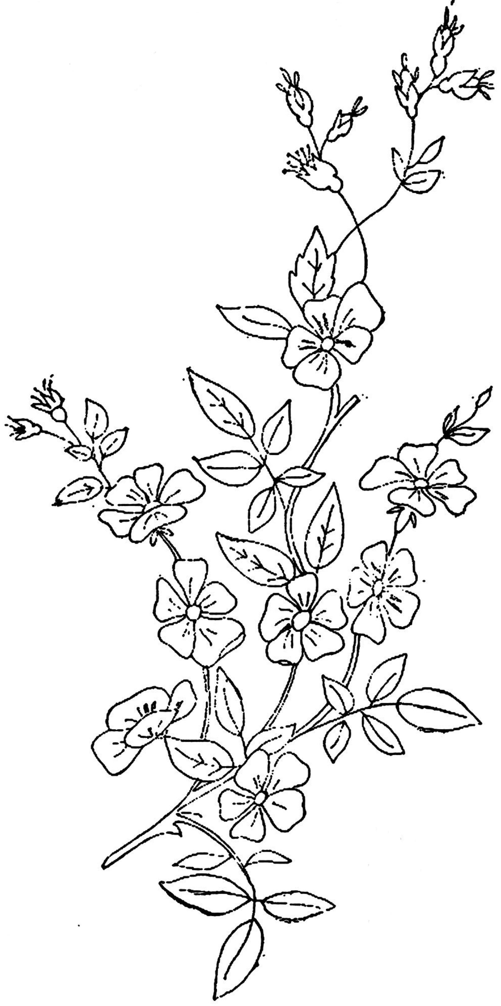 1886 Ingalls Wild Rose (2)