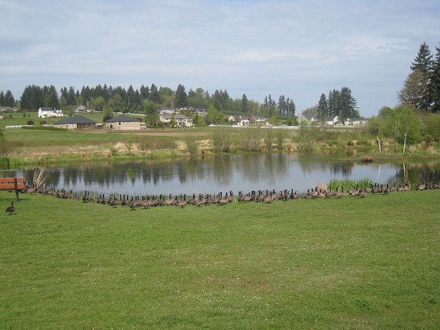 Vancouver Washington Pond