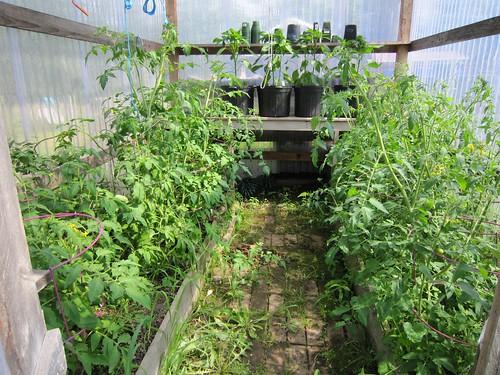 Invernaderos construcci n y producci n en invernaderos en for Construccion de viveros caseros
