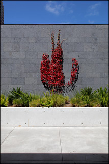 Red Vine, Gray Wall, Blue Sky