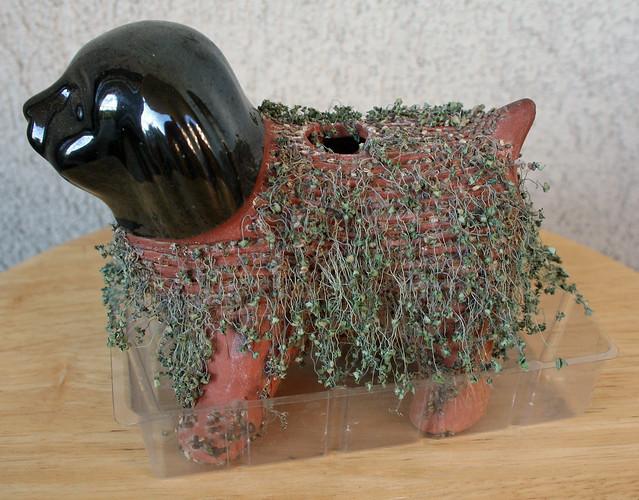 Dead Chia Pet | Flickr...