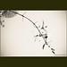 B-096  :  Cành hoa nhỏ. by nguyentuonglinh.