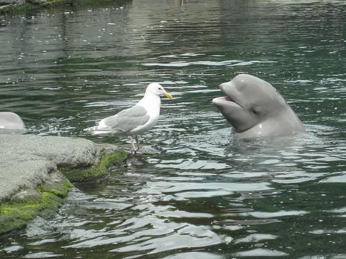 Beluga und Möwe