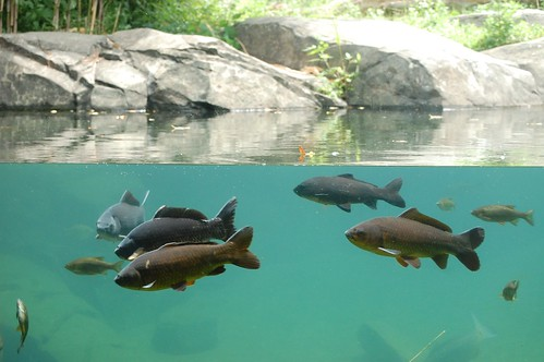 Fish - Bronx Zoo