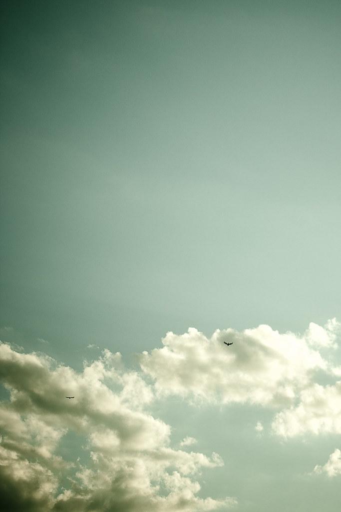 {178/365} fly