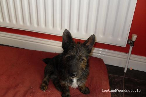 Mon, Jun 28th, 2010 Found Male Dog - The Local Area, Ballybane, Galway
