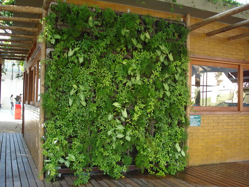 Jardim vertical projetando com parede verde e brise Plantas para paredes verdes