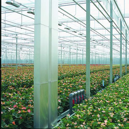RijnPlant greenhouse
