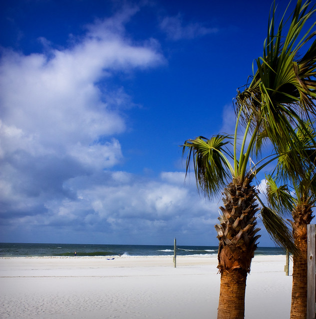 Palm Trees in Gulf Shores Alabama