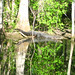 Alligator Canal   DSCN3344