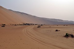 plateau(0.0), wadi(0.0), steppe(1.0), erg(1.0), soil(1.0), sand(1.0), plain(1.0), aeolian landform(1.0), natural environment(1.0), desert(1.0), dune(1.0), landscape(1.0),