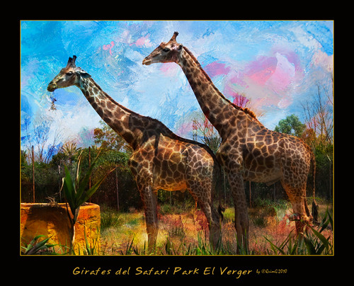 naturaleza nature geotagged golden favorites natura olympus textures juliol jirafas girafes specialtouch diamondstars quimg photoshopcreativo quimgranell joaquimgranell jotbesgroup safariparkvergel afcastelló obresdart