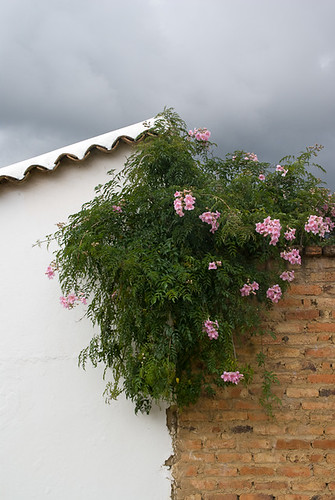 pink flowers roof plants brick lines wall tile de colombia diagonal villa division divided leyva villadeleyva boyaca