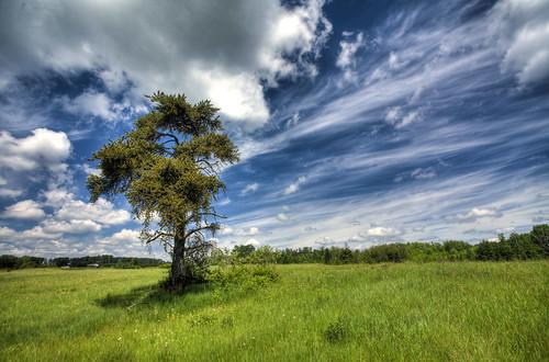 landscape boreal
