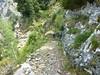 Le sentier de la transhumance en versant Nord de Bocca di Caprunale