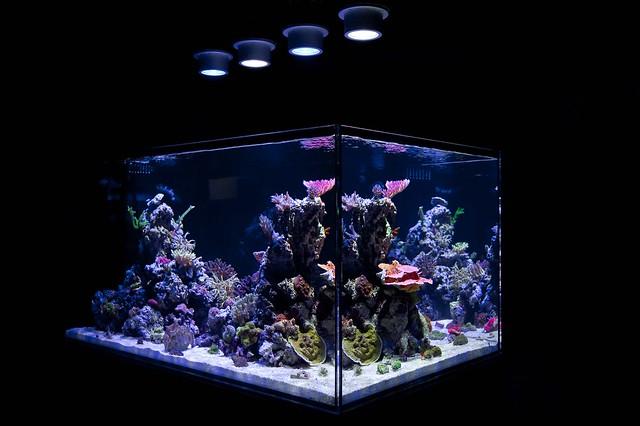 4809333241 1aca6495ff for Saltwater fish tank lights