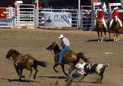 western pleasure(0.0), reining(0.0), fair(0.0), barrel racing(0.0), animal sports(1.0), rodeo(1.0), western riding(1.0), chilean rodeo(1.0), team penning(1.0), event(1.0), equestrian sport(1.0), sports(1.0), charreada(1.0),
