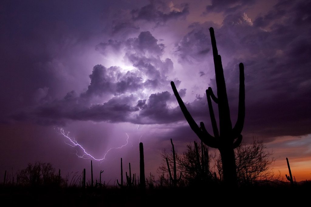 Saguaro Storm and Sunset