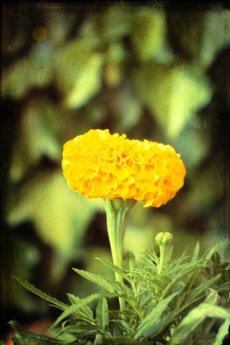 ...el mundo entero en una flor... by Garbándaras
