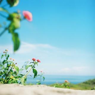 *flower