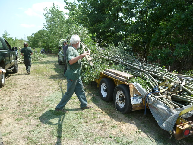 Lou Provost stacks larger saplings on a trailer. Photo by Elizabeth Peters.