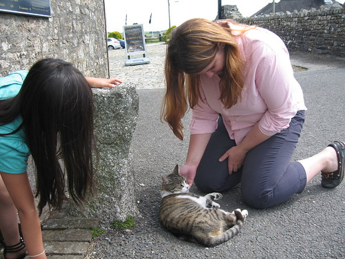 A friendly neighbourhood stray cat who frequented Jamaica Inn