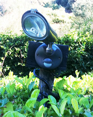 Jean-Luc the hedge explorer