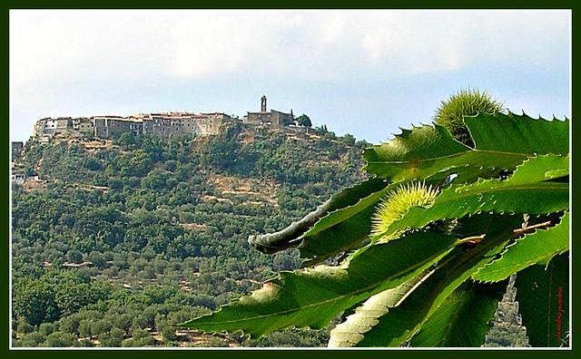 Le castagne di Montegiovi - Chestnuts in Montegiovi