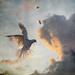 peace dove by AlicePopkorn