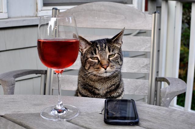 Cool Cat Celebrating his Birthday   Explore NellieMcS' photo ... Bestofcats