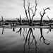 Swamp in Mandurah. by Debbie E Stevens