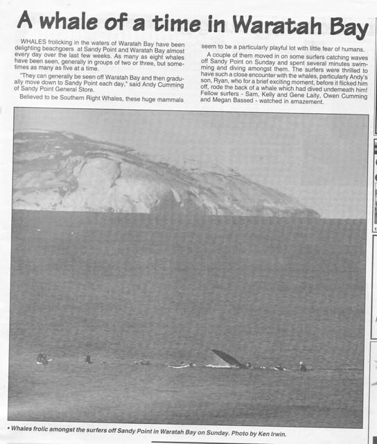 whales in Waratah Bay!