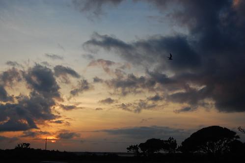 sunset dusk capefearriver maritimeforest ftfishernorthcarolina