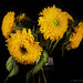 extravagant sunflowers