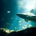 Shark by jiquem