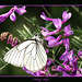 Kelebek by Fikriye Kaya