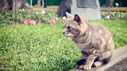 kennedy-gatos