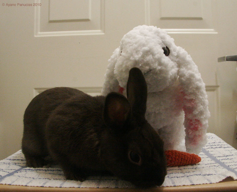 Holland Lop Rabbit pattern by Claire Garland | Tricot lapin ... | 650x800