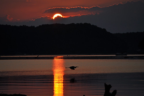 blue light sunset sun sunlight bird heron water silhouette night clouds river evening al cloudy dusk great athens elk gloaming greatphotographers cloudynight alalabama capturethefinest bkhagar regionwide